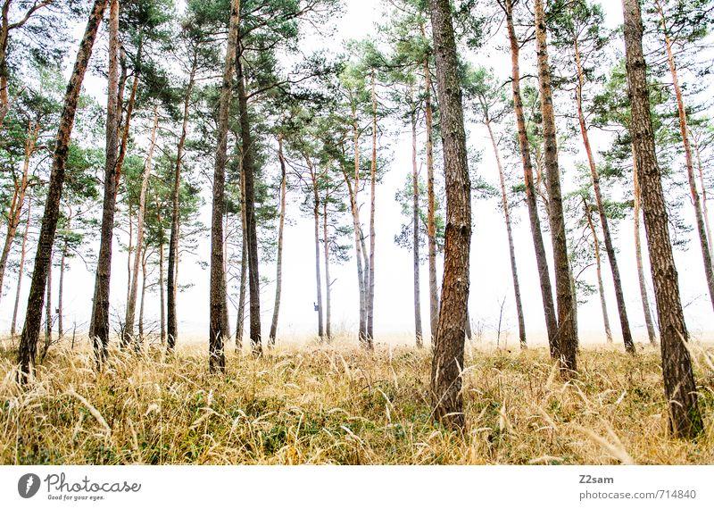 Zauberwald II Umwelt Natur Landschaft Herbst schlechtes Wetter Nebel Baum Gras Sträucher Wald gruselig kalt nachhaltig natürlich grün ruhig Einsamkeit Idylle