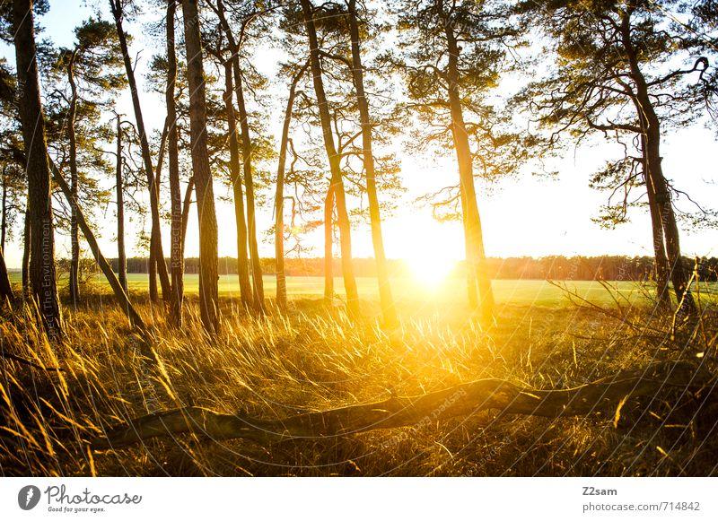 Feierabend Natur Sommer Sonne Baum Einsamkeit Erholung ruhig Landschaft Wald Umwelt Wärme Wiese natürlich Idylle Sträucher Schönes Wetter