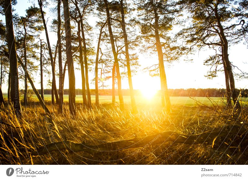 Feierabend Umwelt Natur Landschaft Sonne Sonnenaufgang Sonnenuntergang Sonnenlicht Sommer Schönes Wetter Baum Sträucher Wiese exotisch nachhaltig natürlich