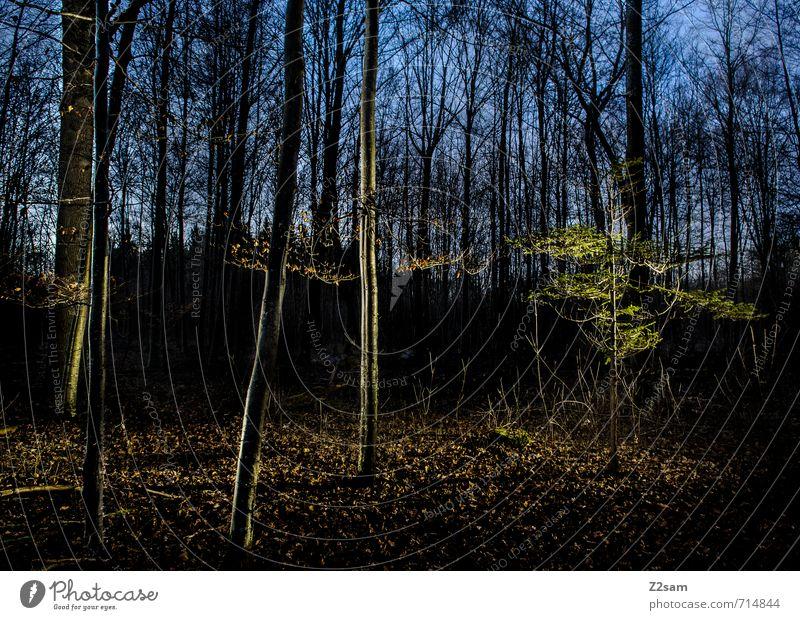Wald bei Nacht Himmel Natur blau grün Baum ruhig Landschaft Blatt dunkel kalt Umwelt natürlich Idylle Sträucher einfach