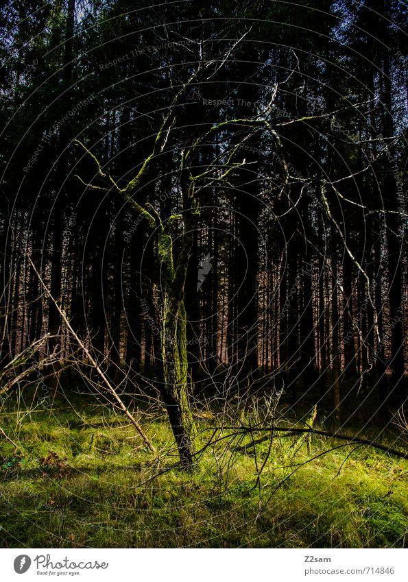Erleuchtet Umwelt Natur Landschaft Frühling Baum Gras Sträucher Moos Wald dunkel gruselig natürlich grün ruhig träumen Einsamkeit skurril Surrealismus