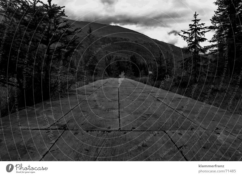 Bretter, die die Welt bedeuten Steg Holz Wald Froschperspektive schwarz dunkel Außenaufnahme Wege & Pfade Bodenbelag Holzbrett Landschaft Perspektive