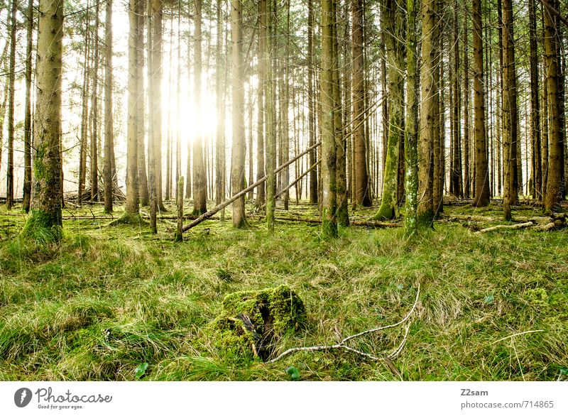 back to the woods Umwelt Natur Landschaft Sonne Sonnenlicht Sommer Schönes Wetter Baum Gras Sträucher Wald Erholung nachhaltig natürlich grün Vorsicht ruhig