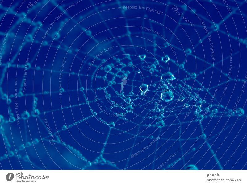 spinnennetz - scharf Spinne Morgen Netz blau Seil Wasser