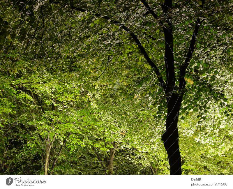 nächtliche Photosynthese Natur Baum grün ruhig Wald dunkel Erholung Lichtspiel