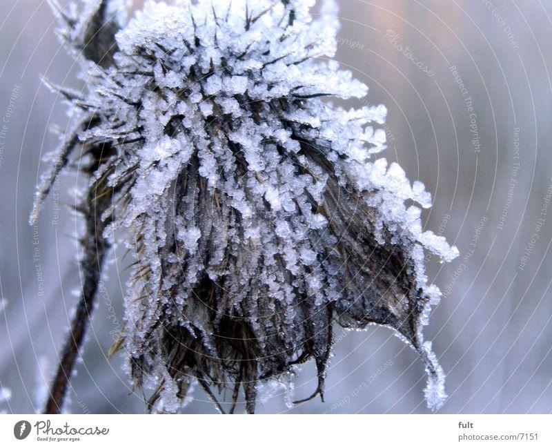 kalt alt Pflanze Winter kalt Eis Frost