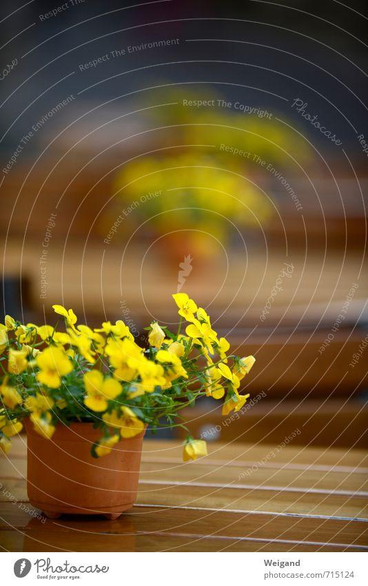 Frühlingsempfang Tisch genießen gelb Stimmung Freude Glück Fröhlichkeit Lebensfreude Frühlingsgefühle Vorfreude Vertrauen Sympathie Freundschaft Restaurant