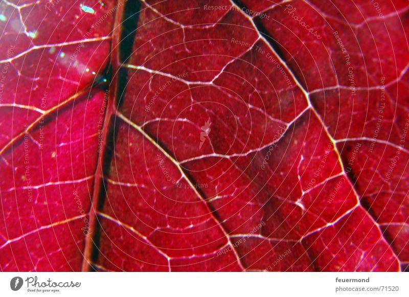 Lebensadern Baum rot Blatt Winter kalt Herbst herbstlich Gefäße