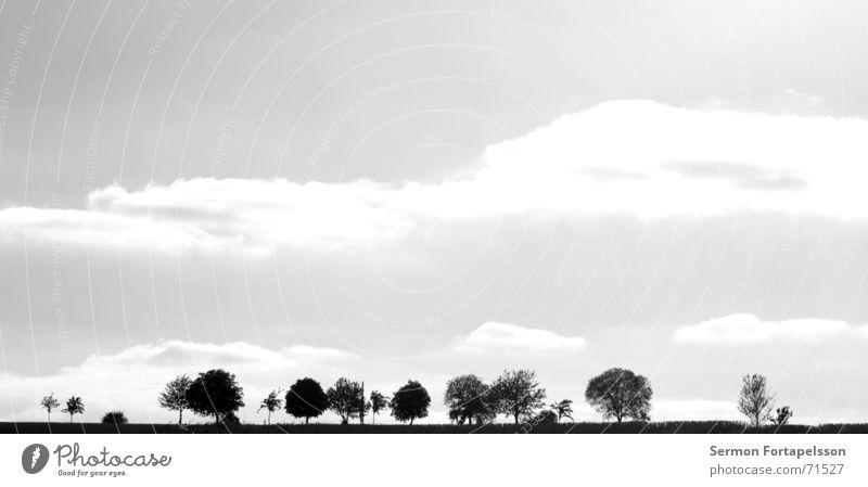 provinz, skyline Baum Wolken Feld Sommer Nachmittag Samstag Einsamkeit Landwirtschaft Wiese Wald flach einzeln Himmel Wind Silhouette Skyline Amerika Ast