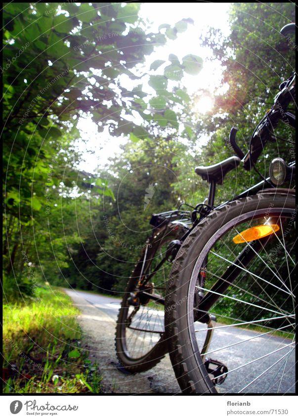 Heimweg vom Baggersee Sonne Sommer Freude Straße Wald Landschaft Fahrrad
