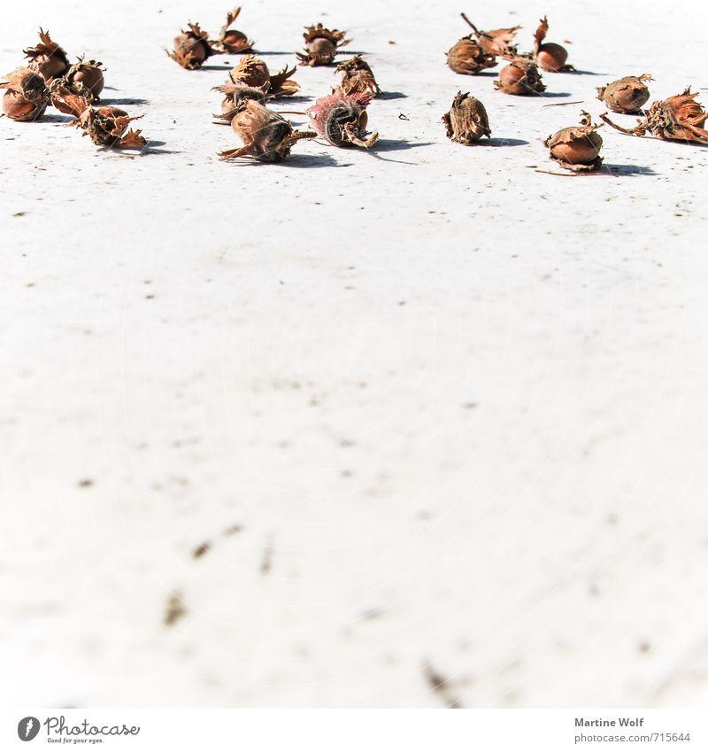Haselnuss Natur Lebensmittel Frucht Marmor Haselnuss