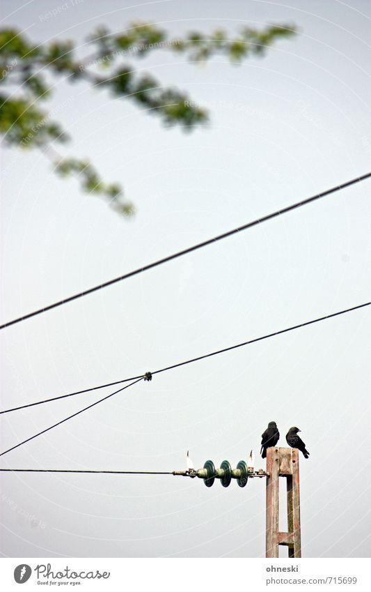 Elektrisierend Kabel Energiewirtschaft Schienenverkehr Oberleitung Tier Vogel 2 Tierpaar warten Farbfoto Gedeckte Farben Außenaufnahme Textfreiraum Mitte Tag