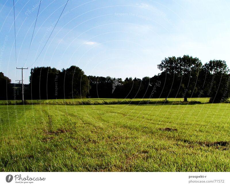 Blau-Dunkel-Grün Himmel Baum grün blau Wiese groß Elektrizität Kabel Abenddämmerung