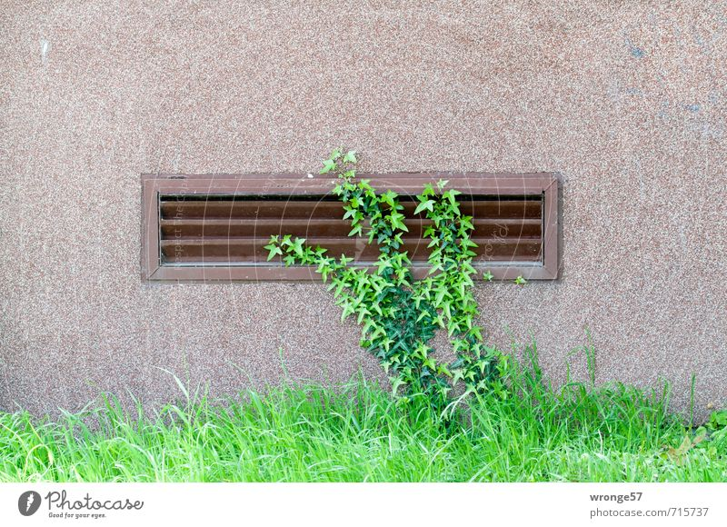 Wandbegrünung Gras Efeu Plattenbau Wohnhaus Mauer Fassade Fenster Stadt Gitter Belüftung Haus Grünpflanze Pflanze Mauerpflanze Ranke Keller Farbfoto mehrfarbig