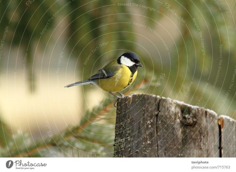 Natur schön grün weiß Tier schwarz Winter Wald gelb Umwelt Leben lustig klein natürlich Garten Vogel