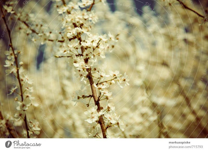 blütezeit schön Pflanze Landschaft Tier Umwelt Leben Wiese Garten Lebensmittel Park Feld Frucht Wachstum ästhetisch Ast Lebensfreude