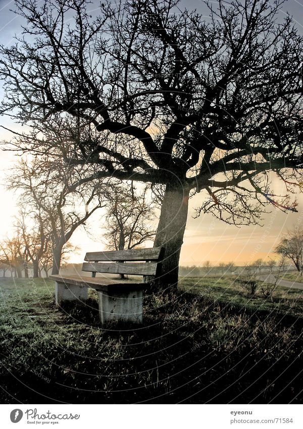 ruhe Baum Winter ruhig Einsamkeit Herbst Wiese Gras Nebel schlafen Bank Sofa Gelassenheit Baumstamm Wald bequem Altersversorgung