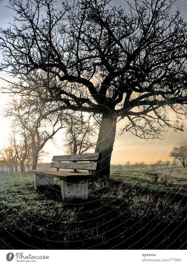 ruhe bequem ruhig Baum Wiese Nebel Herbst Nachtruhe Nebelschleier Sofa Halbschlaf Baumstruktur Altersversorgung Ruhemöbel schlafen schweigen Gras Waldlichtung