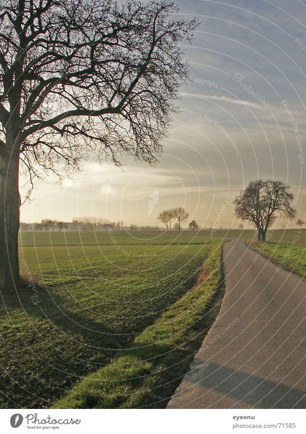 Weg Baum grün Herbst Wiese Wege & Pfade Sand Nebel Erde
