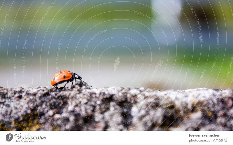 Glückspfad Tier Frühling Schönes Wetter Wildtier Käfer 1 Beton Bewegung krabbeln laufen wandern sportlich klein mehrfarbig Erfolg Kraft Willensstärke Mut