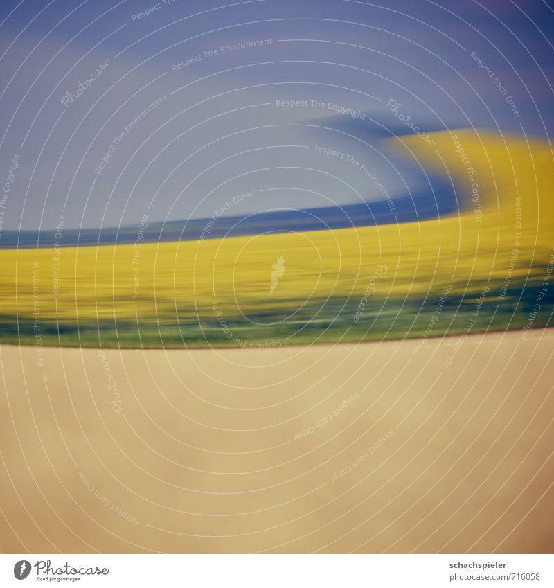 RAPS I Natur Landschaft Pflanze Nutzpflanze Raps Rapsfeld Feld Fußweg PKW blau braun gelb Reflexion & Spiegelung Farbfoto Außenaufnahme abstrakt Menschenleer