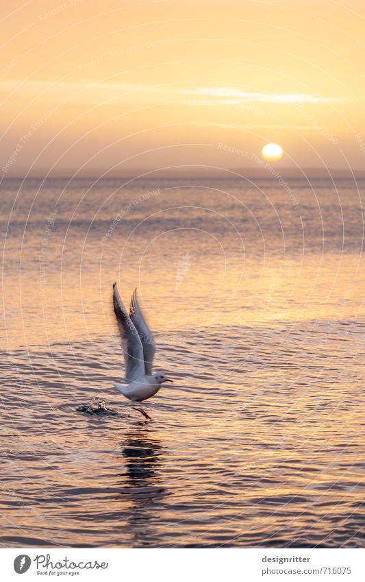 Aufschwung Ferien & Urlaub & Reisen Wasser Meer Tier Strand Küste fliegen Vogel Wetter Wellen Schönes Wetter Wassertropfen Ostsee Möwe
