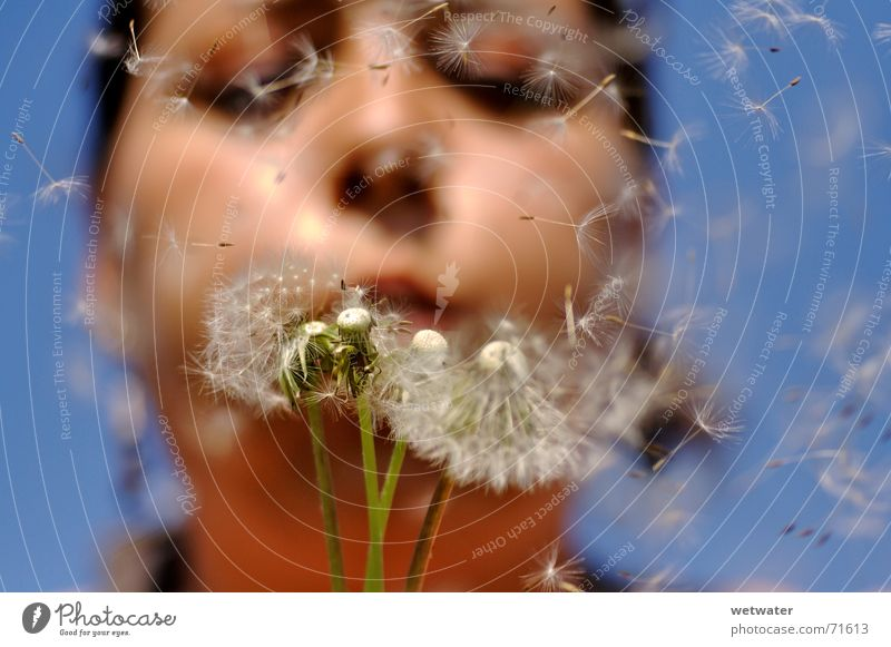 Blowing Dandelion 2 blau Sommer Mädchen Gesicht Glück Luft Wind fliegen Wunsch Löwenzahn blasen Samen Allergie Kind Pollenflug