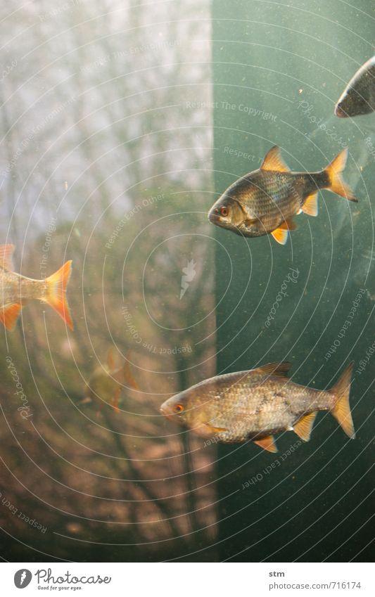 eintauchen Umwelt Natur Landschaft Tier Wasser Baum Wildtier Fisch Zoo Aquarium Tiergruppe Schwarm Schwimmen & Baden blau Gelassenheit geduldig ruhig Schweben