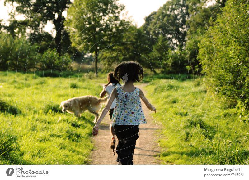 kind sein Wiese Feld Mädchen Kind Spielen toben Sommer Herbst Fröhlichkeit laufen rennen