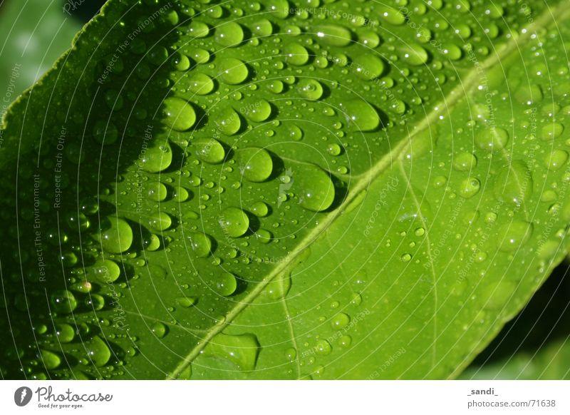 wassertropfen Blatt grün Pflanze Wasser Wassertropfen Regen