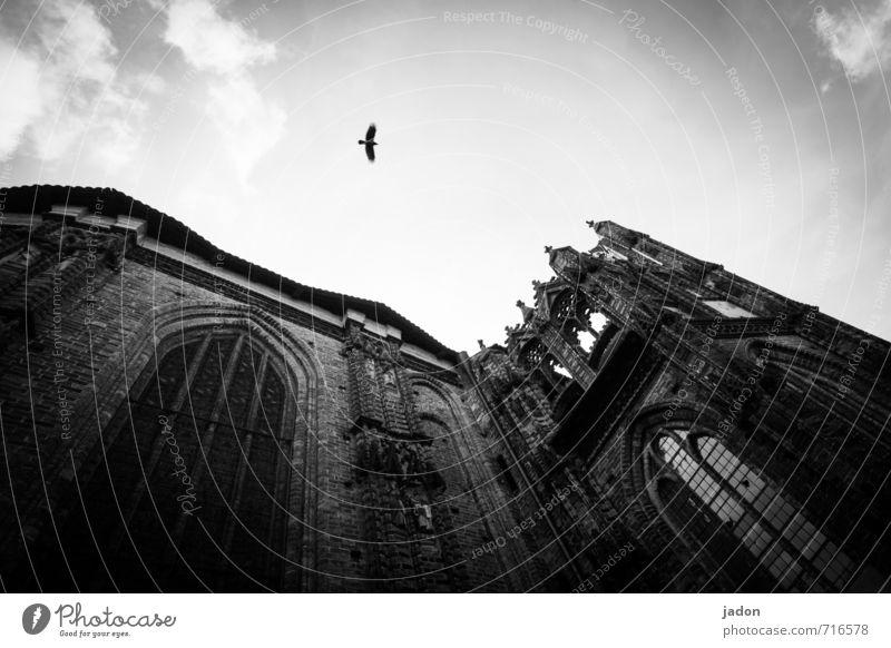 echt | ein bisschen gruselig Himmel Stadt alt Wolken Tier Fenster Wand Architektur Gebäude Mauer fliegen Vogel Fassade Angst Kraft Kirche