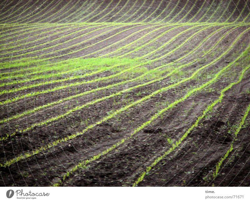 Im Fluss des Lebens Natur Frühling Linie Zufriedenheit Feld Wellen Erde Macht authentisch Teppich Verlauf fleißig schwingen Aussaat bescheiden Mais