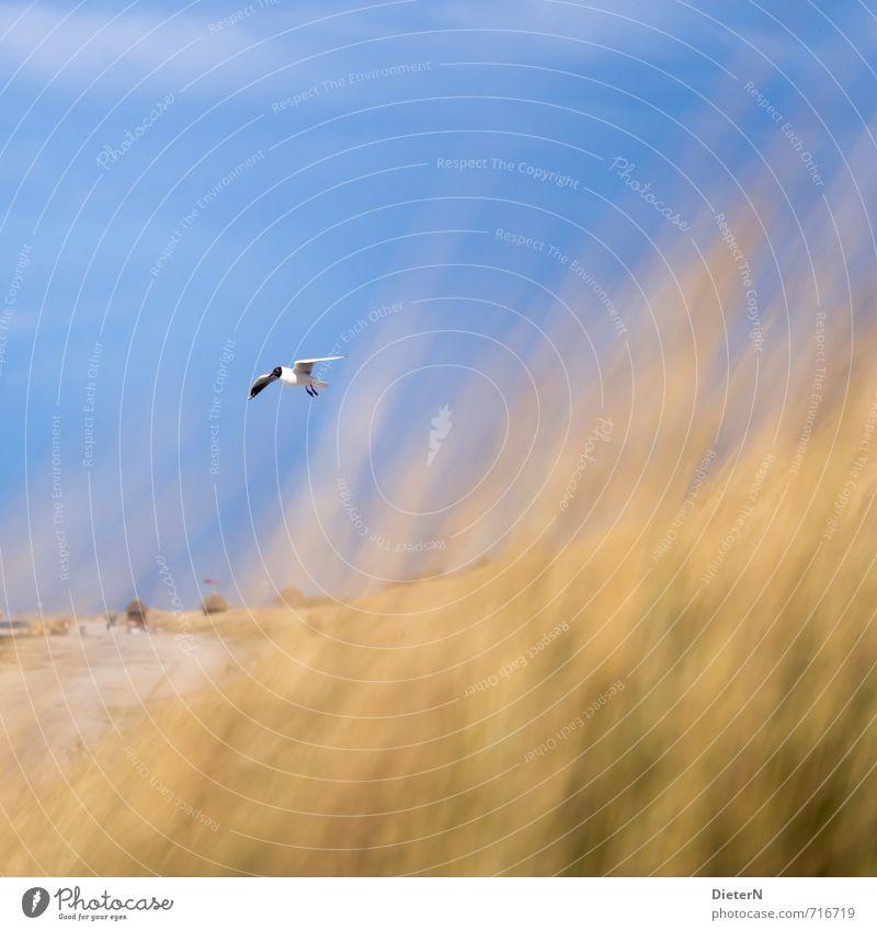 Schweben Strand Meer Sand Wasser Gras Ostsee Tier Wildtier Vogel 1 blau gelb Mecklenburg-Vorpommern Wustrow Himmel Möwe Farbfoto mehrfarbig Außenaufnahme