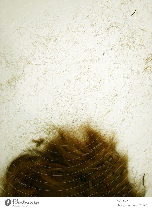 haarausfall Mensch weiß Kopf Haare & Frisuren klein braun sitzen liegen mehrere viele geschnitten Ausfall Haarausfall