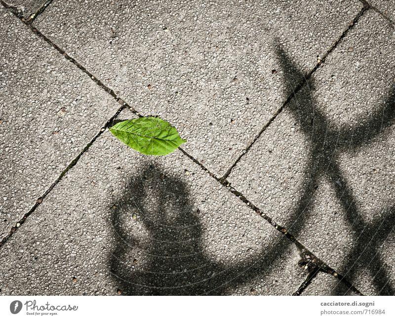 Zu jung zum Sterben grün Einsamkeit Blatt schwarz Umwelt Traurigkeit Wege & Pfade Tod Frühling grau liegen trist Beton bedrohlich einfach kaputt