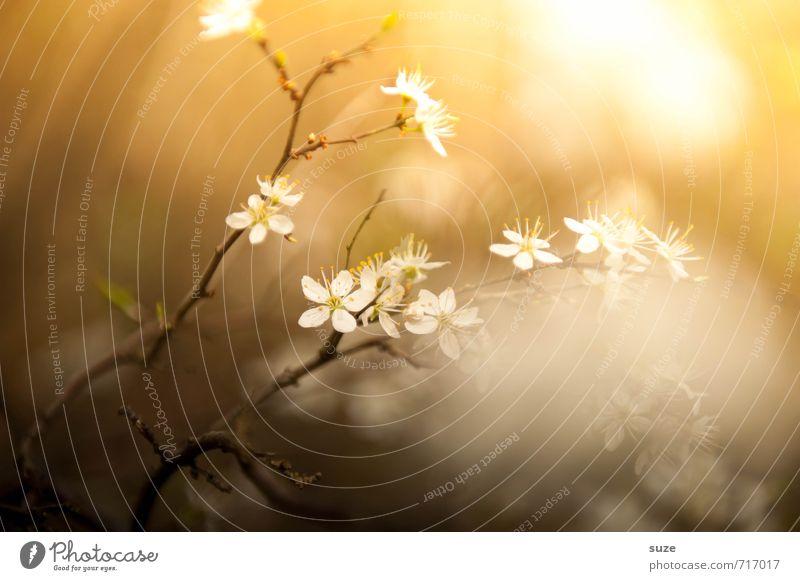 Frühlingchen Lifestyle schön harmonisch ruhig Meditation Duft Umwelt Natur Pflanze Blüte Blühend leuchten Wachstum fantastisch hell klein natürlich braun gelb