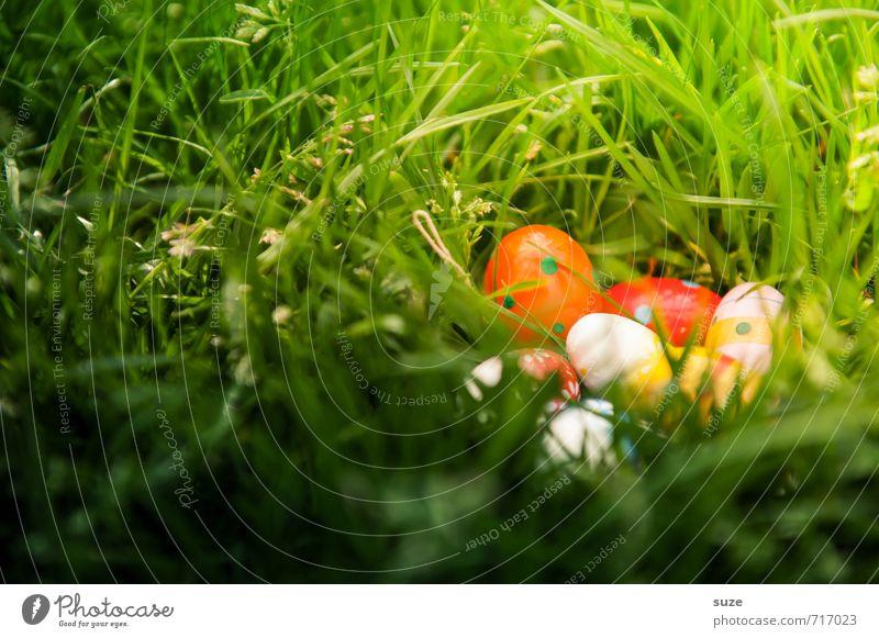 Versteck schön grün Wiese Frühling Gras klein Glück natürlich Feste & Feiern Garten Wetter Kindheit Dekoration & Verzierung Fröhlichkeit niedlich Ostern
