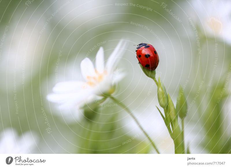 farbfoto Natur grün weiß Pflanze Sommer rot ruhig Tier Umwelt Wiese Frühling Gras Garten Zufriedenheit Wildtier ästhetisch