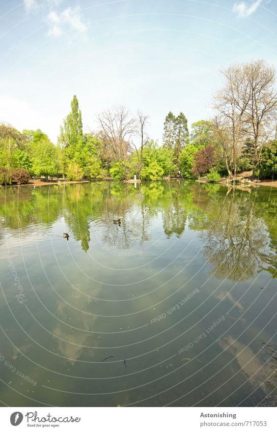 im Teich Himmel Natur blau grün weiß Wasser Pflanze Baum Landschaft Wolken Tier Wald Umwelt Wärme Frühling Schwimmen & Baden