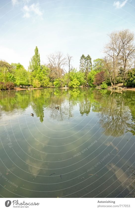 im Teich Umwelt Natur Landschaft Pflanze Luft Wasser Himmel Wolken Frühling Wetter Schönes Wetter Wärme Baum Sträucher Park Wald Seeufer Wien Tier Wildtier Ente