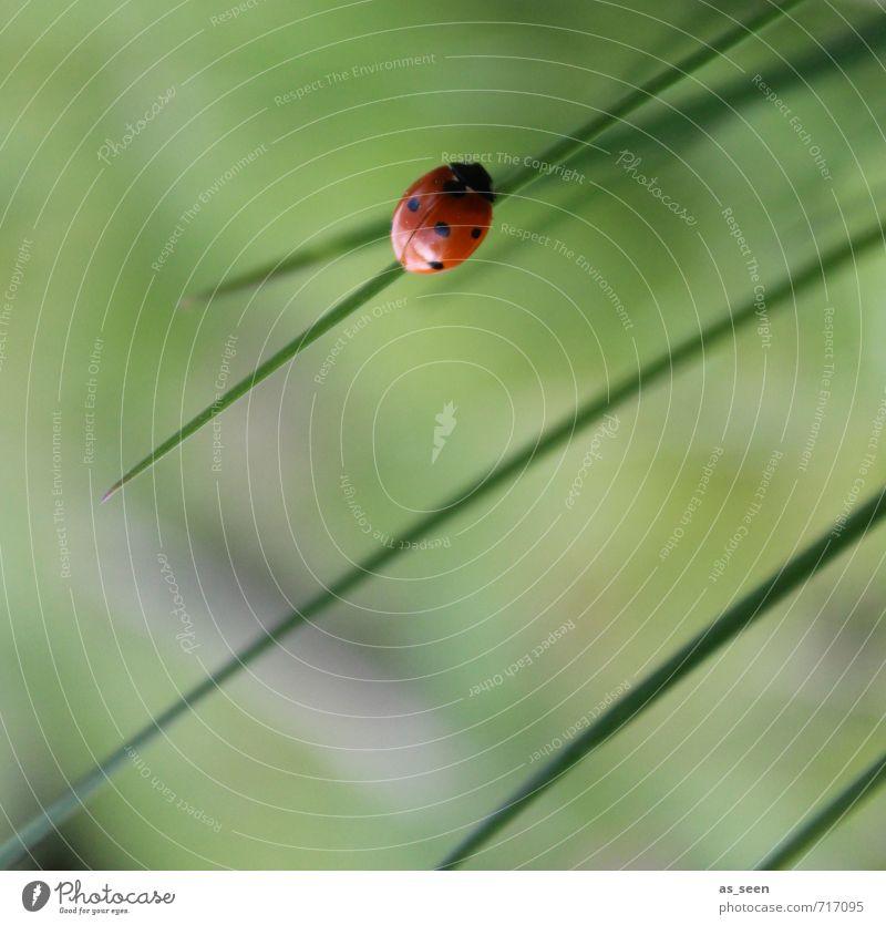 Einfach mal abhängen Natur grün Pflanze Sommer Erholung rot ruhig Tier schwarz Umwelt Wiese Frühling Glück natürlich Gesundheit Garten