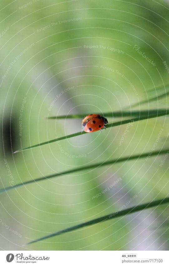 Start ins Grüne Natur grün Pflanze Sommer Erholung rot Tier schwarz Umwelt Frühling Gras klein Glück Gesundheit Garten Zufriedenheit