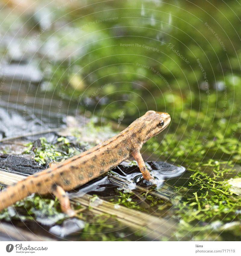 auf und davon Wasser beobachten Teich Frosch Lurch Amphibie Molch