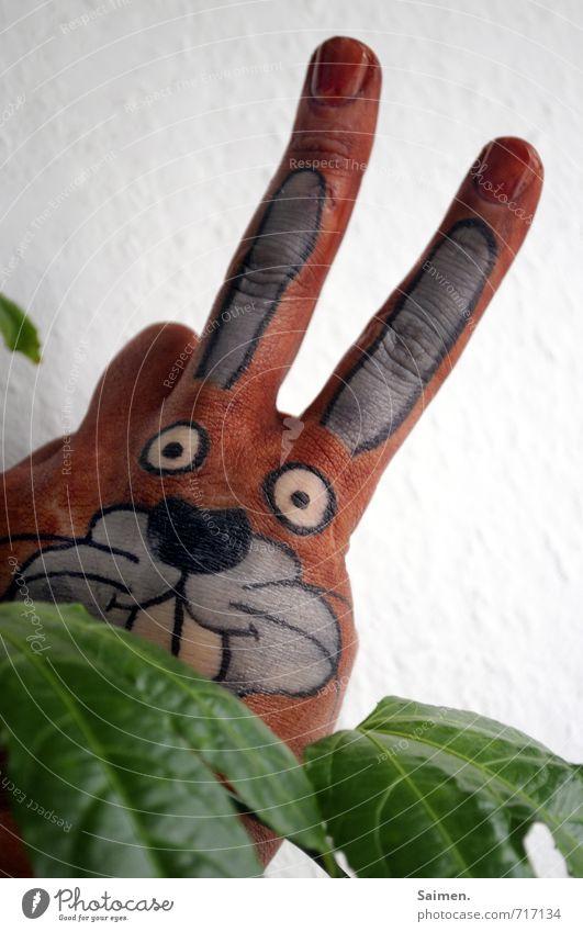 Guck Guck Pflanze Grünpflanze Tier 1 Blick lustig Hase & Kaninchen schön gemalt bemalt Comic Comicfigur Hasenkopf Hasenohren Kreativität niedlich Farbfoto
