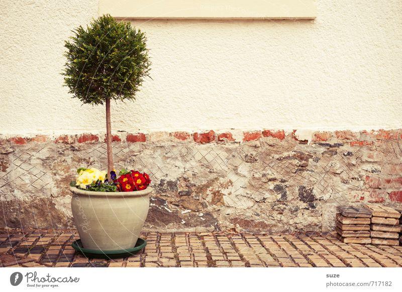 Bodenständig | im Topf schön Baum Blume Haus Wand Frühling Mauer Freizeit & Hobby Fassade Häusliches Leben Wachstum trist Dekoration & Verzierung authentisch einfach Blühend