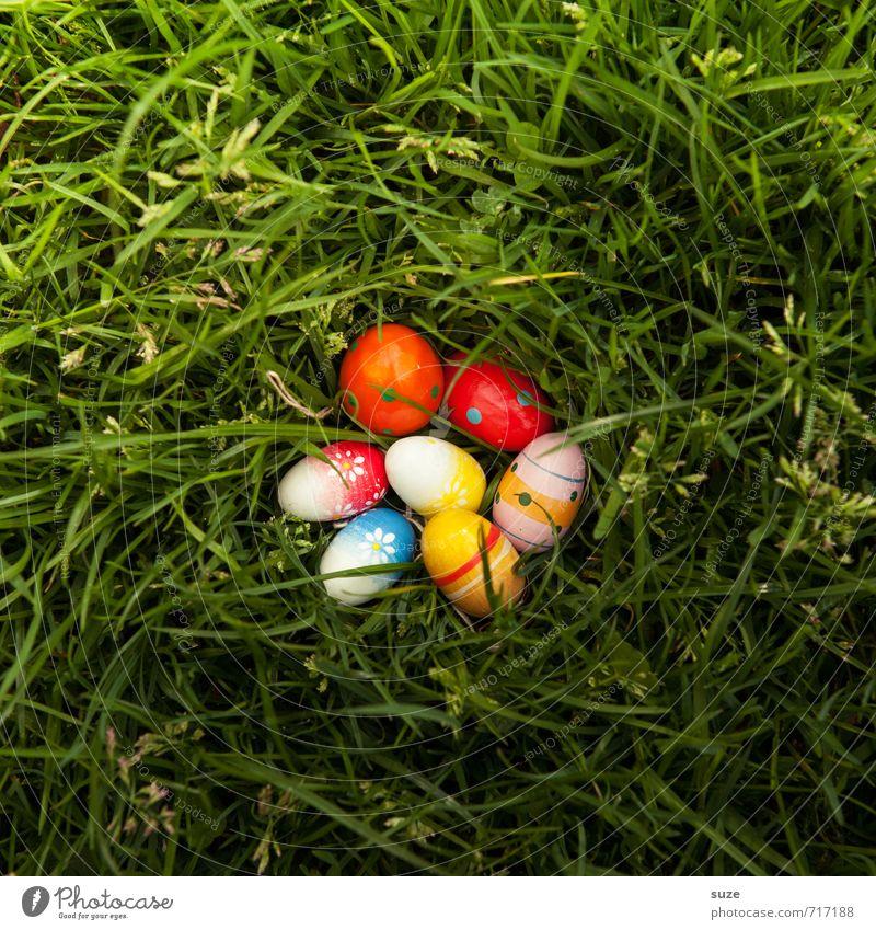 Bunter Eiersalat schön grün Wiese Frühling Gras Spielen klein natürlich Feste & Feiern Garten Freizeit & Hobby Lifestyle Kindheit Dekoration & Verzierung