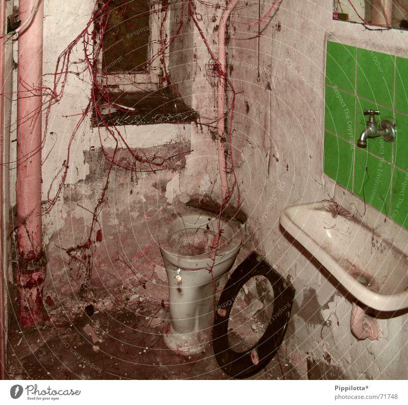 ToilEtte DeluXe dreckig Ekel Regenrinne Waschbecken fließen Fenster vergessen verfallen Toilette alt verfaulen Pflanze Übelriechend