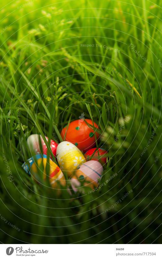 Endlich entdeckt Garten Dekoration & Verzierung Feste & Feiern Ostern Kindheit Frühling Wetter Gras Wiese entdecken Fröhlichkeit schön einzigartig klein