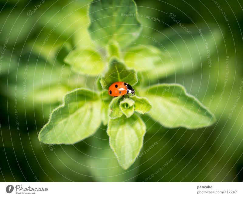 läuftundläuftundläuft Natur Pflanze Sommer Blatt Grünpflanze Tier Käfer 1 Zeichen ästhetisch Erfolg Glück klein saftig schön Wärme weich grün rot Hoffnung