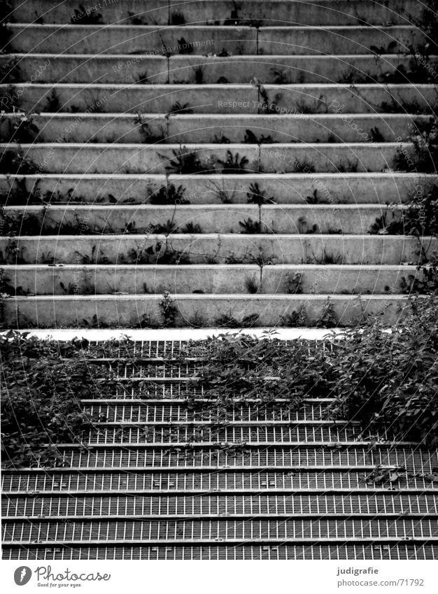 Parallelen Beton parallel bewachsen Pflanze Gitter Anlegestelle grau trist schwarz weiß Detailaufnahme verfallen Schwarzweißfoto Treppe Linie Rost
